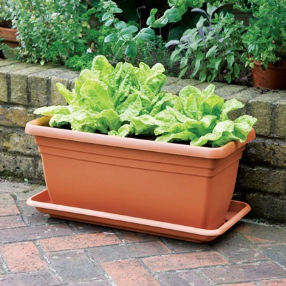 Deep Trough & Quadro Planter