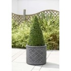 Lead Effect Planter - Round